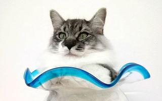 Mâţe la borcan: 30 de imagini care arată că pisicile pot avea orice formă