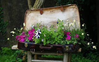 100 de idei pentru amenajarea grădinilor şi teraselor