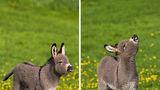 Măgărușii sunt adorabili! 30 de imagini care te vor convinge