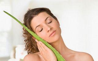 Cum să faci tratament de scalp și balsam natural cu aloe vera
