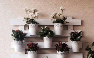 25 de idei pentru aranjarea ghivecelor de flori