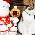 Pisicile au readus la viață un sat aproape pustiu. Atrag milioane de turiști în fiecare an!