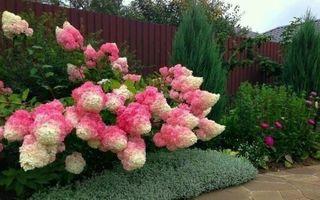 7 cei mai frumoși arbuști pe care să-i plantezi în fața casei
