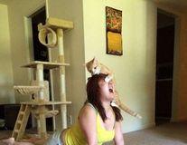 Simpatice şi nesuferite: 15 situaţii în care pisicile au chef să strice tot