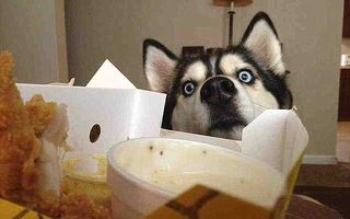 Necuvântătoare şi nesătule: Când animalele cerşesc mâncare, nimeni nu le rezistă!