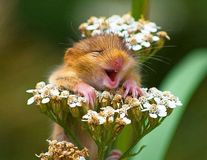 20 de animale care par extrem de fericite. Te vei amuza copios!