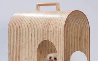 """""""Căsuţe"""" cu stil: Cele mai neobişnuite modele de cuşti pentru câini"""