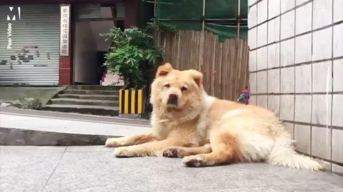 câine