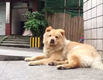 Când animalele ne dau lecţii: Povestea unui câine care îşi aşteaptă în fiecare zi stăpânul în staţia de metrou