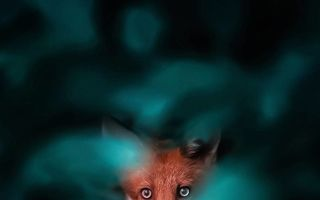 Ţinutul vulpilor: 37 de imagini care te vor face să îndrăgeşti aceste animale