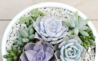 Cum să îngrijești corect plantele suculente