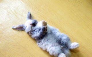 21 de animale care au pierdut eroic lupta cu somnul: Sunt terminate de oboseală!