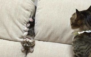 25 de pisici caraghioase care stârnesc hohote de râs cu prostiile pe care le fac
