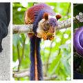 15 imagini care ne arată că natura e maestră în joaca de-a culorile