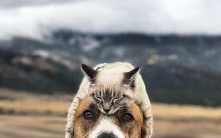 Stăpânele internetului: 21 de imagini care arată că pisicile știu să pozeze ca niște vedete