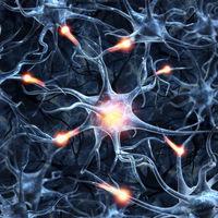 Ce efecte au unele ciuperci asupra creierului
