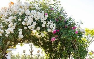 30 cele mai frumoase arcade cu flori. Ce plante să folosești