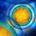 Au apărut primele ovule umane crescute în laborator