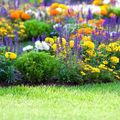 15 plante pentru grădină care înfloresc toată vara