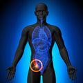 De ce este important apendicele