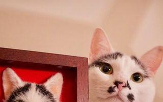 Artista japoneză care a uimit Internetul cu portretele de pisici 3D