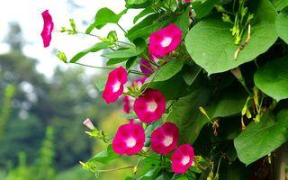 Plante cățărătoare care cresc repede. 5 idei