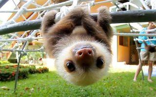25 de imagini cu pui de animale prea drăguţi pentru a-i descrie în cuvinte