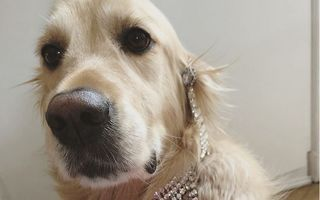 Acest câine şi stăpânul lui au recreat fotografii celebre ale Madonnei. Te vei amuza copios!