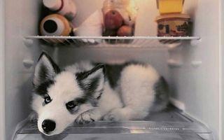 35 de animale amuzante care știu cum să facă față caniculei