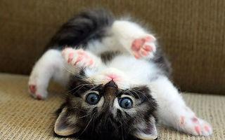 8 august, Ziua Internaţională a Pisicii: 60 de imagini irezistibile cu cele mai răsfățate animale