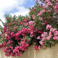 10 plante toxice din grădină care sunt foarte periculoase pentru copii