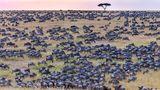 Imaginea care îți provoacă spiritul de observație: Unde se ascunde zebra?