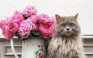 Cele mai frumoase pisici din lume. 25 de imagini