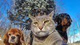 20 de animale care își fac selfie-uri mai frumoase decât tine