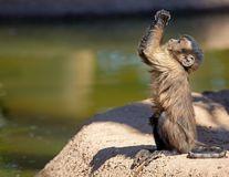 Imaginile anului: O maimuță repară o mașină - VIDEO
