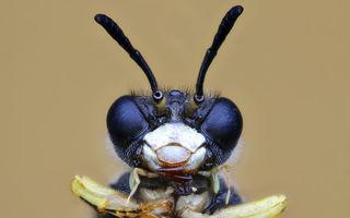 Gângănii simpatice: 30 de imagini care te fac să vezi altfel insectele