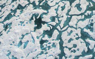 Ascuns în imperiul alb: Poți să vezi ursul polar din această imagine?