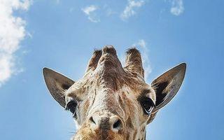 Animalele au reacţii uimitoare! 20 de imagini amuzante