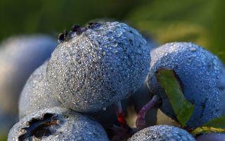 O poveste în culori minunate: Așa se coc afinele!