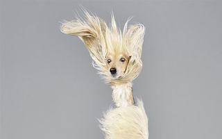 Când or zbura câinii: 20 de imagini care arată că orice e posibil