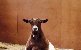 Cum arată animalele înainte să nască. 17 imagini sensibile
