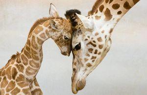 Familie animale