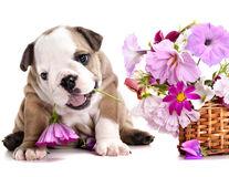 9 metode de a ține câinele departe de flori
