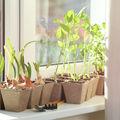 5 legume pe care le poți crește în interior, indiferent de vreme