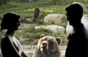 nuntă zoo