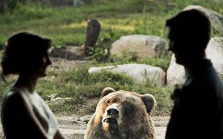 Doi tineri s-au căsătorit la grădina zoo: Reacția ursului e genială