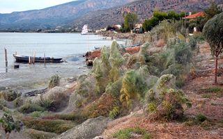 Urzeala arahnidelor: Păianjenii au luat cu asalt o insulă din Grecia
