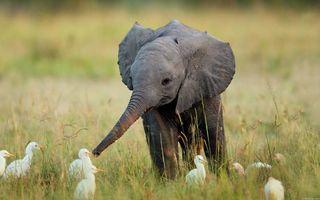 Aceşti pui de elefanţi te vor face să zâmbeşti instantaneu! 30 de imagini