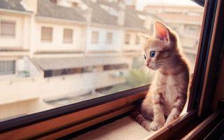 """19 pisici drăgălașe care își așteaptă stăpânii: """"Miau dor de tine!"""""""