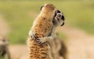 Şi animalele se îndrăgostesc! 20 de imagini înduioşătoare